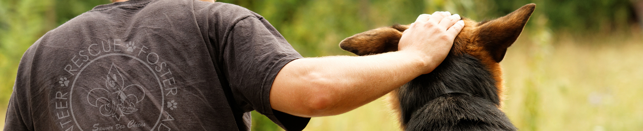 Sauver Des Chiens German Shepher Dog Rescue